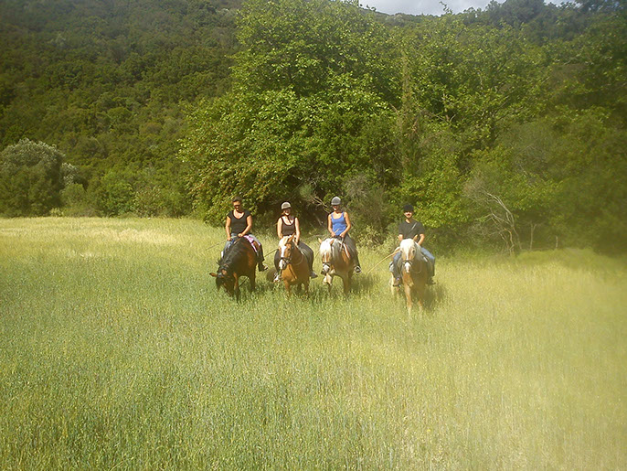 Horse riding in Kefalonia - Kefalonia Horse Riding Stables