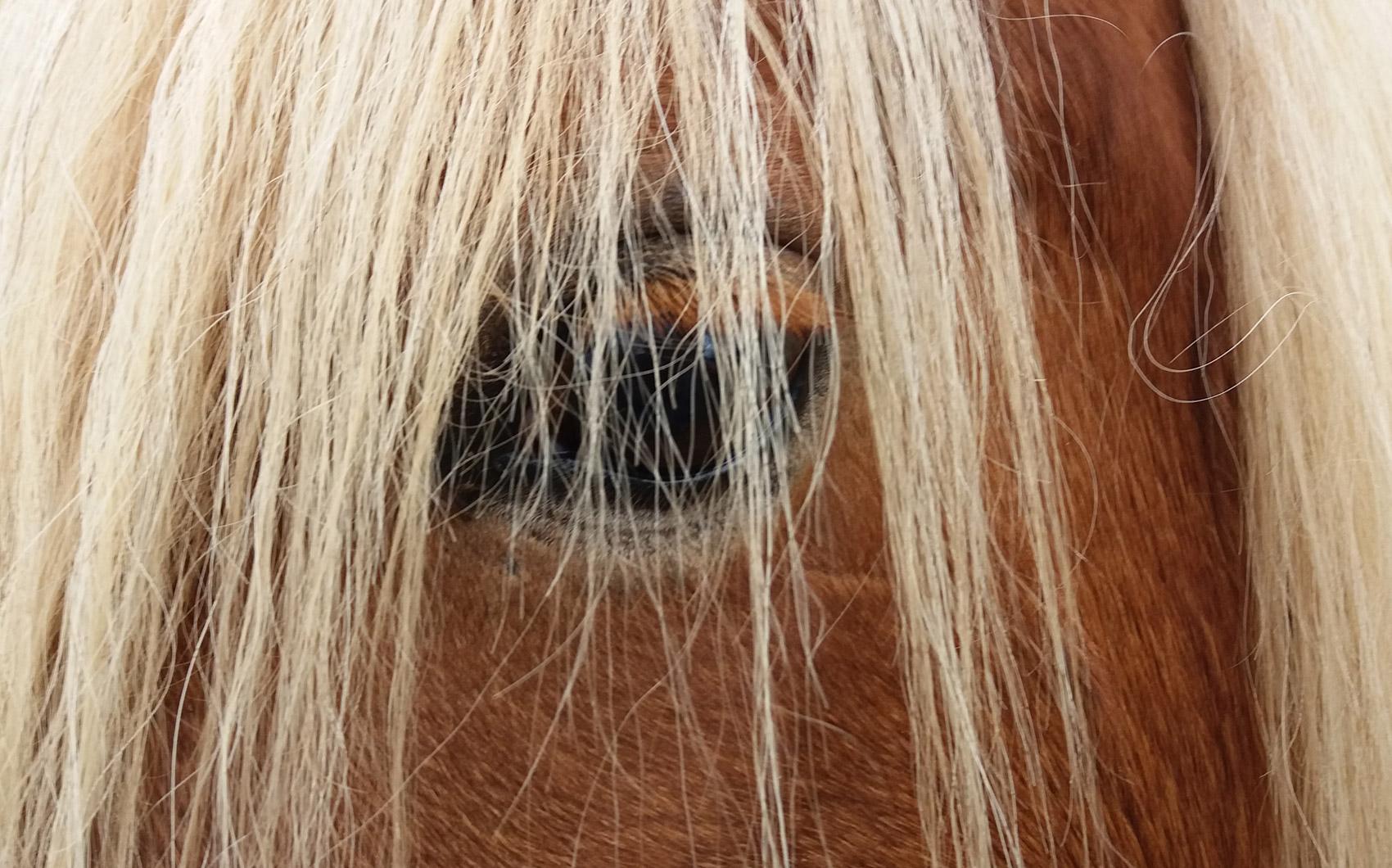 kegfalonia_horse_riding_sami_kefalonia_03
